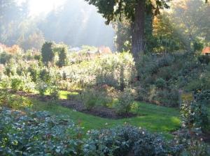 My trip to the Portland Rose Garden.